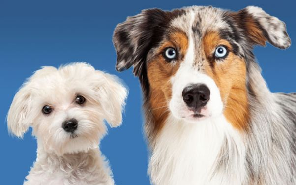 Dog Grooming in Battle Creek