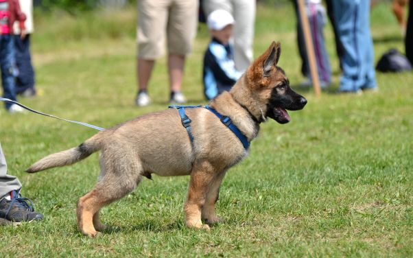 Doggy Daycare in Battle Creek
