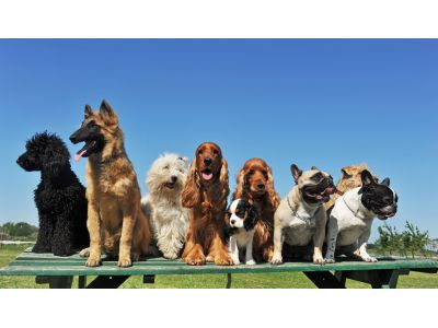 Doggy Daycare in Battle Creek