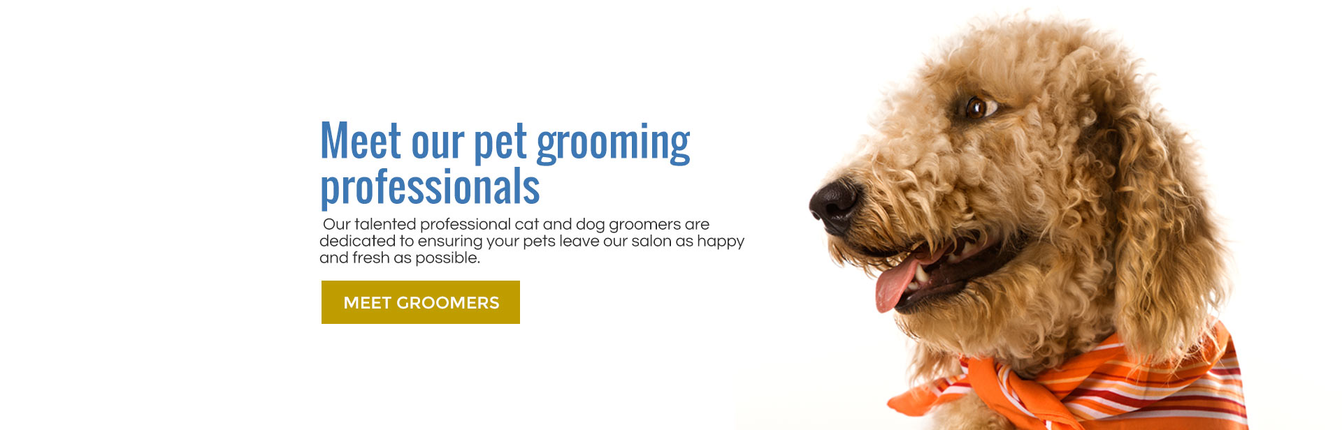 Meet our talented groomers